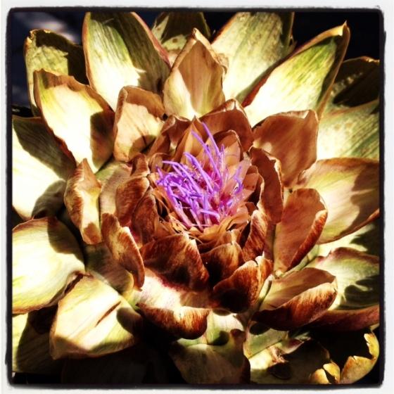 healthy healing artichoke dip