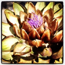 Artichokes Fight Cancer