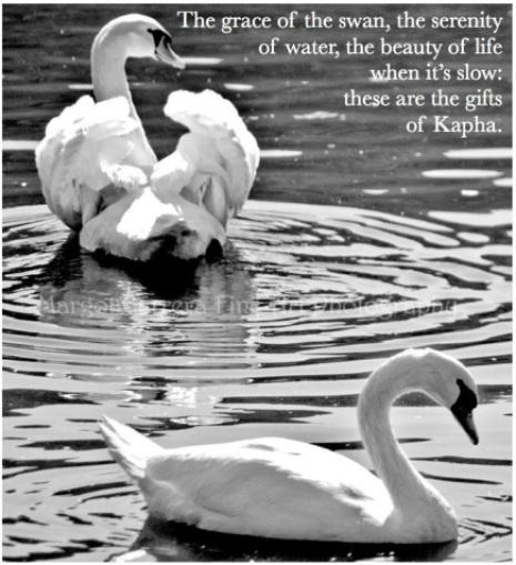Kapha Swan