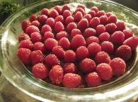 raspberry chocolate dessert