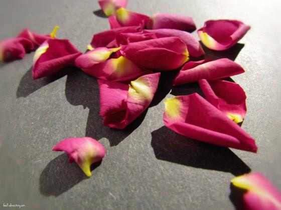 rose petals: how to make rose tea
