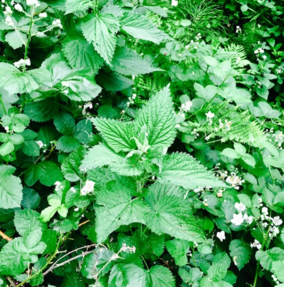 nettles and berry blooms